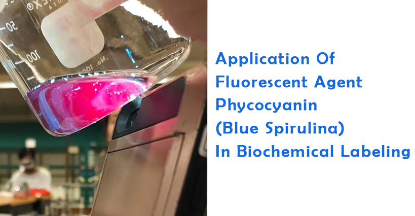 Application Of Fluorescent Agent Phycocyanin(Blue Spirulina) In Biochemical Labeling