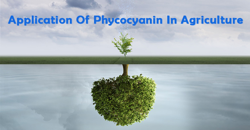 Application Of Phycocyanin In Agriculture